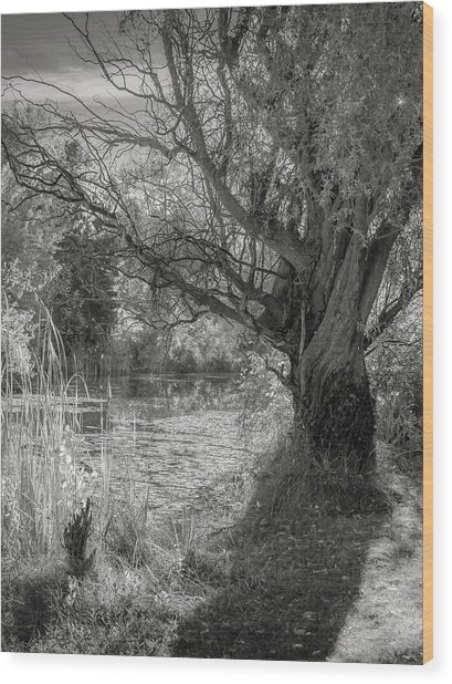 Old Willow Wood Print