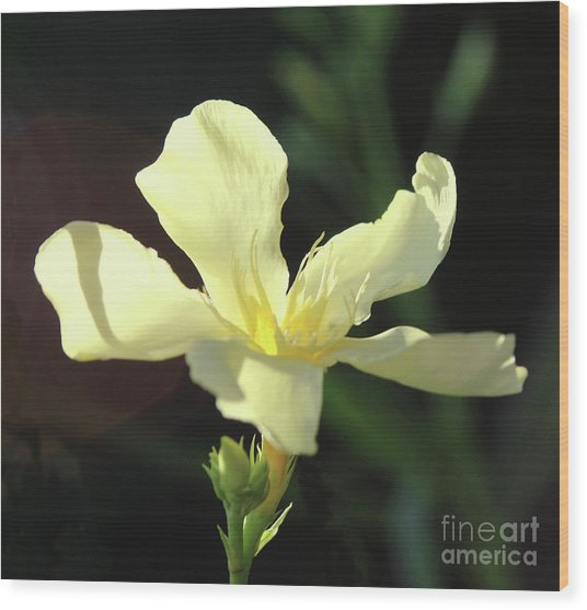 Oleander Marie Gambetta 1 Wood Print