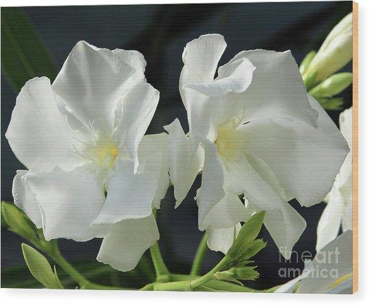 Oleander Mont Blanc 1 Wood Print