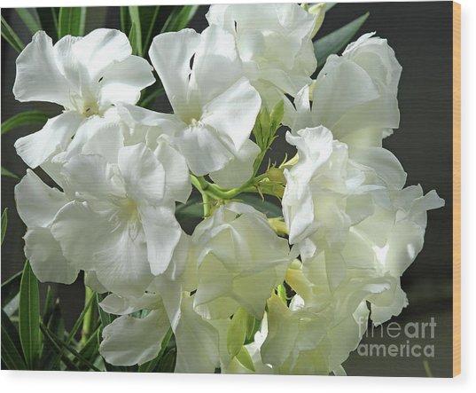 Oleander Mont Blanc 2 Wood Print