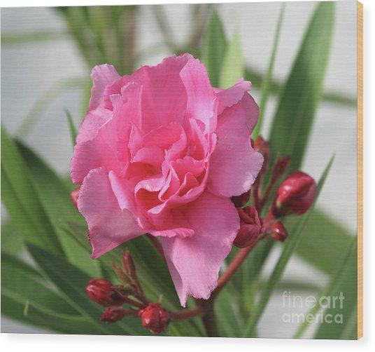 Oleander Splendens Giganteum 1 Wood Print