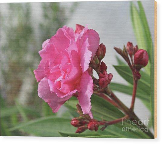 Oleander Splendens Giganteum 4 Wood Print