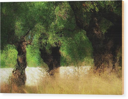 Olive Forest Wood Print by Svetlana Peric