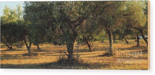 Olive Grove 3 Wood Print