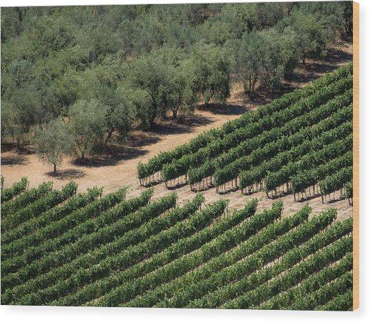 Olive Grove Meets Vineyard Wood Print