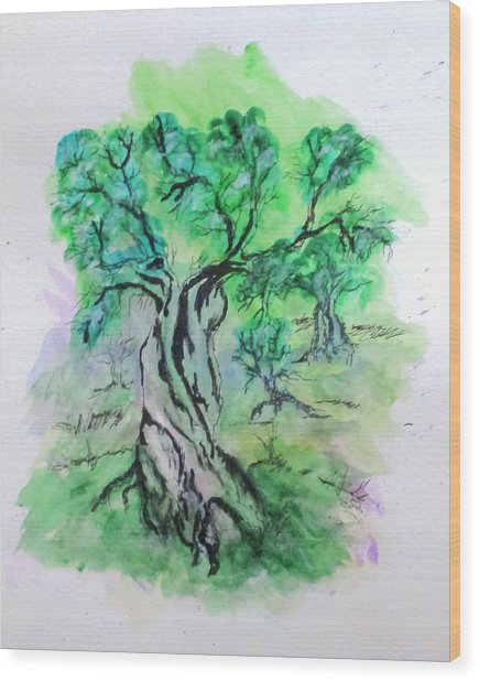Olive Tree Grove Wood Print