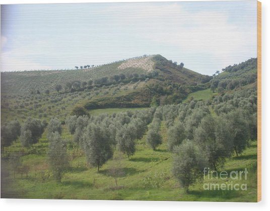 Olive Trees Wood Print by Dennis Curry