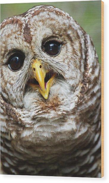 Oliver Owl Wood Print