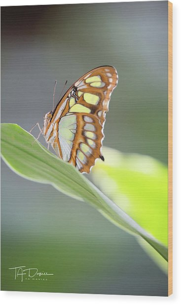 On A Leaf Wood Print