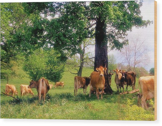 On Emerald Pastures Wood Print by Jan Amiss Photography