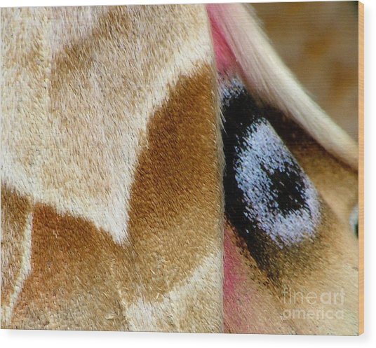On Fragile Moth's Wings Wood Print