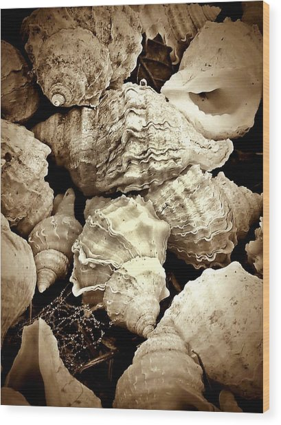 On The Beach - Shells In Sepia Wood Print