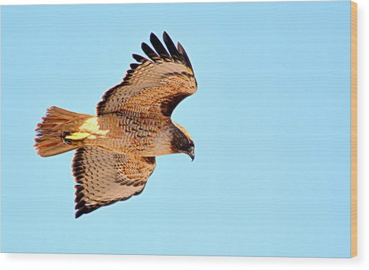 Wood Print featuring the photograph On The Hunt by AJ Schibig
