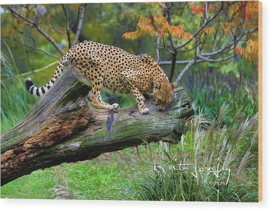 On The Prowl Wood Print by Keith Lovejoy
