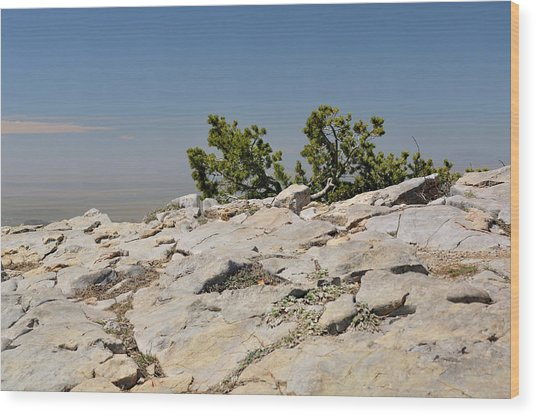 On Top Of Sandia Mountain Wood Print