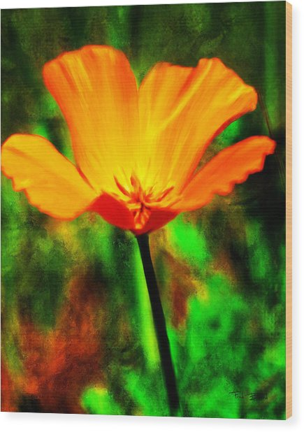 One California Poppy Wood Print