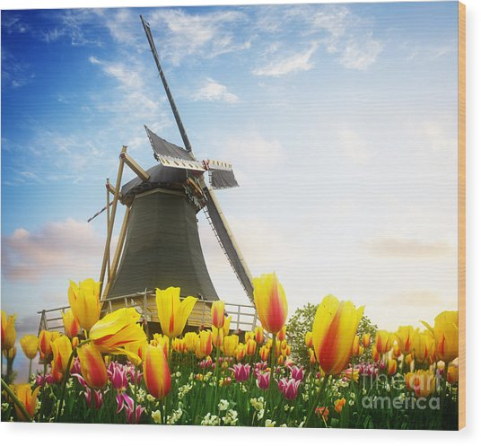 One Dutch Windmill Over  Tulips Wood Print