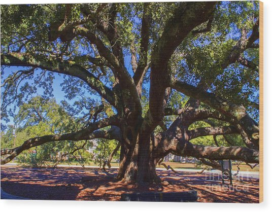 One Friendship Tree Wood Print