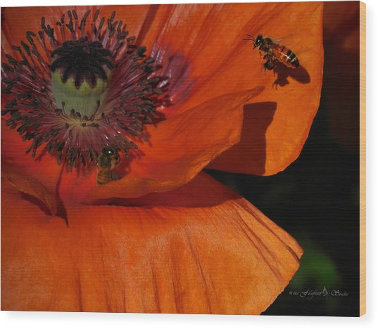 One Poppy And A  Bee Wood Print