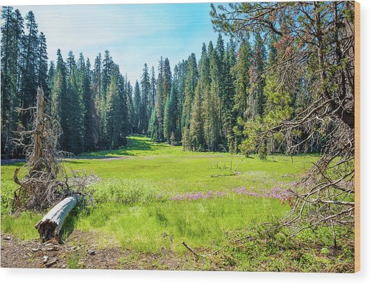 Open Meadow- Wood Print