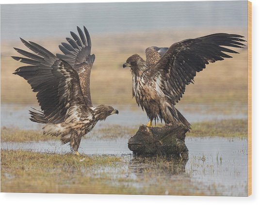 Open Wings Wood Print