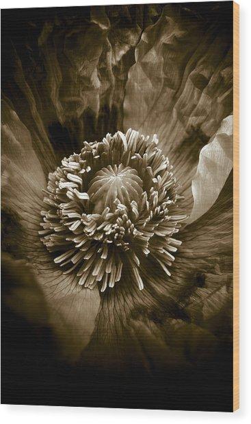 Opium Poppy Papaver Somniferum Wood Print by Frank Tschakert