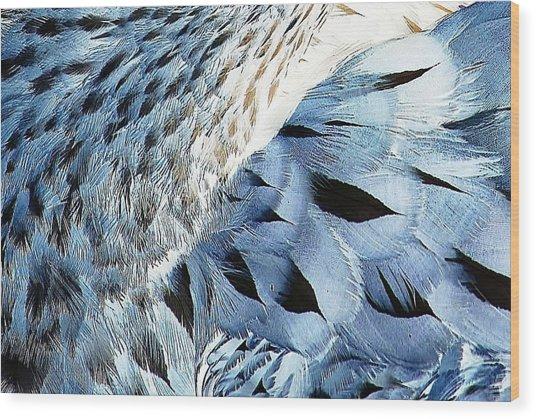 Blue Limpkin Wood Print