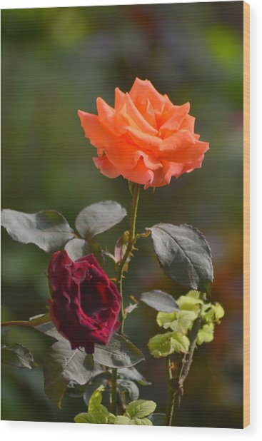 Orange And Black Rose Wood Print
