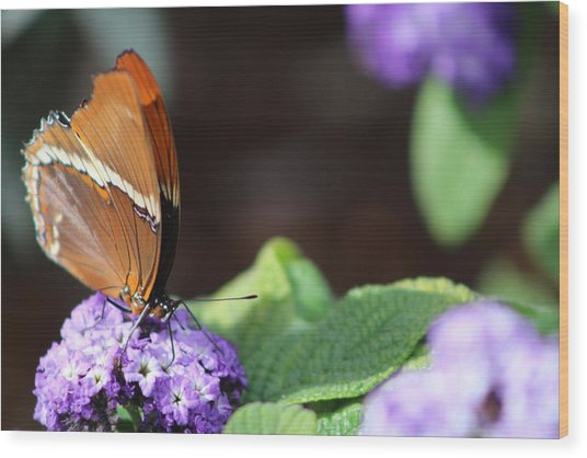 Orange And Brown Butterfly On Purple Wood Print