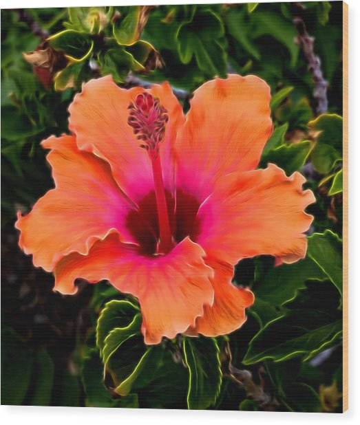 Orange And Pink Hibiscus 2 Wood Print