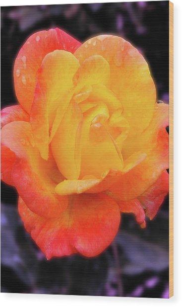 Orange And Violet Rose Wood Print