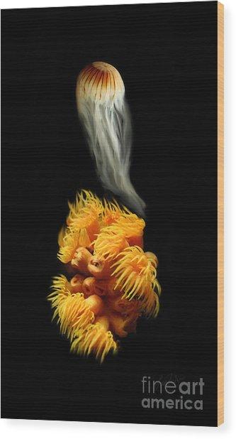 Orange Anemone Wood Print