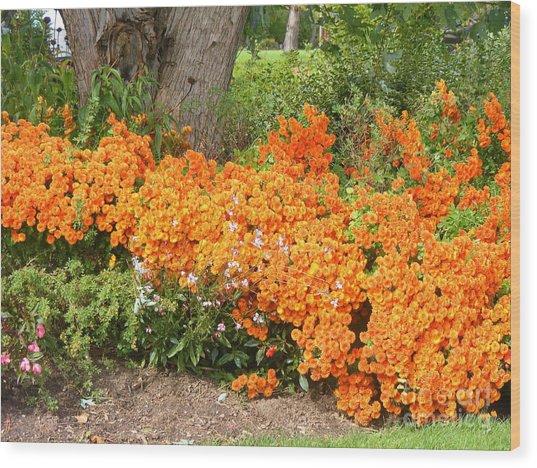 Orange Beauty Wood Print by Deborah Selib-Haig DMacq