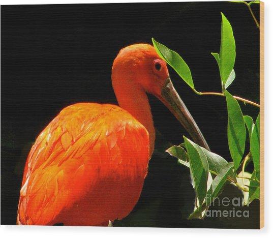 Orange Beauty Wood Print by Debra     Vatalaro