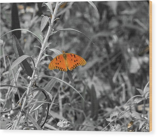 Orange Butterfly In Black And White Background Wood Print