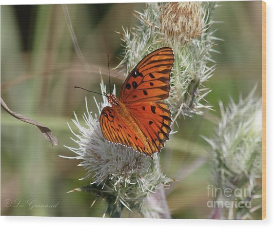 Orange Butterfly Wood Print