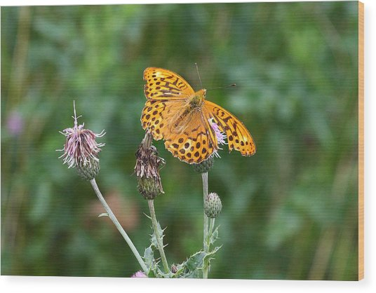 Orange Butterfly Wood Print by Pierre Leclerc Photography