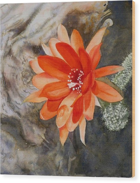 Orange Cactus Flower II Wood Print