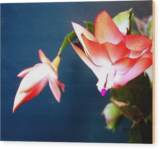 Orange Christmas Cactus II Wood Print