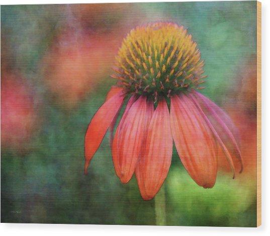 Orange Coneflower 2576 Idp_2 Wood Print