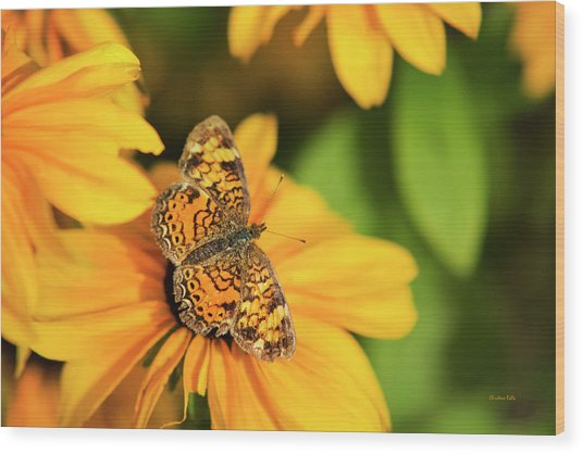 Wood Print featuring the photograph Orange Crescent Butterfly by Christina Rollo