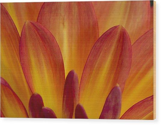Orange Dahlia Petals Wood Print