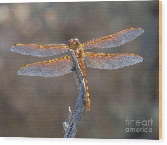 Dragonfly 3 Wood Print