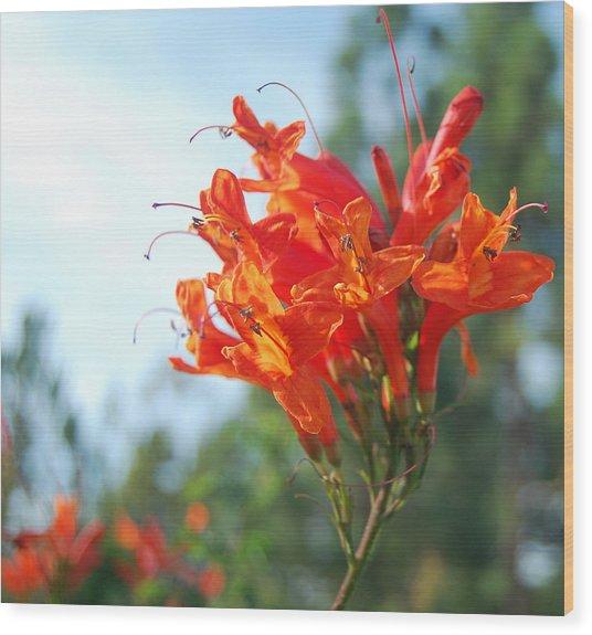 Orange Echo Wood Print by Jean Booth