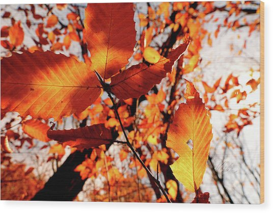 Orange Fall Leaves Wood Print