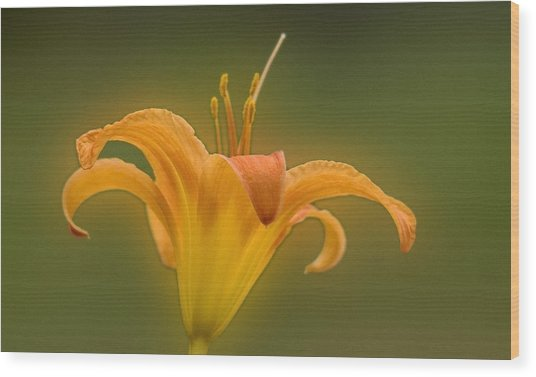 Orange Flower Head  Wood Print
