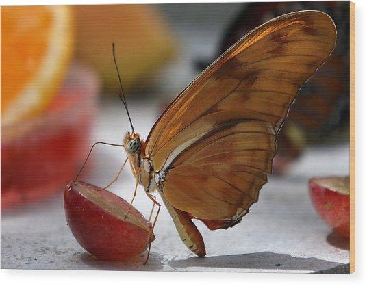 Orange Julia Butterfly Wood Print