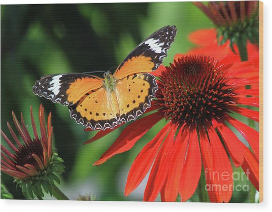 Orange Lacewing Wood Print
