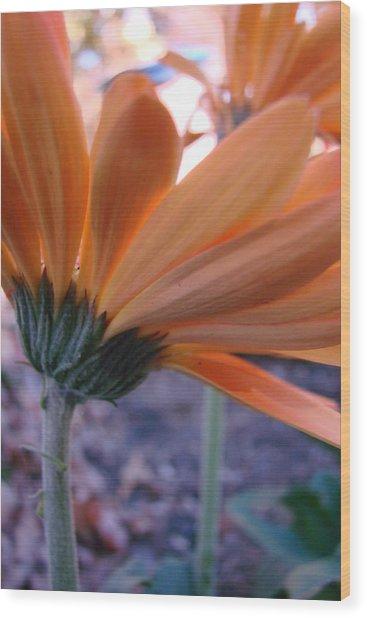 Orange Lady Wood Print
