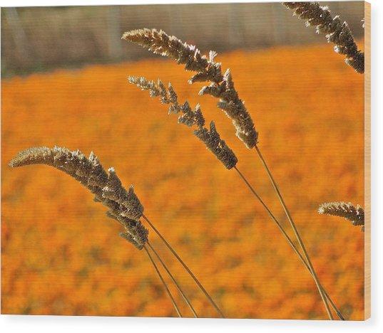 Orange Marigolds Wood Print by Liz Vernand